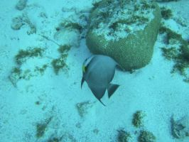 AngleFish Two by KellBell523