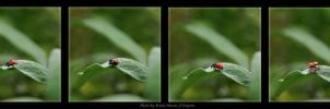 Ladybird will fly by brijome