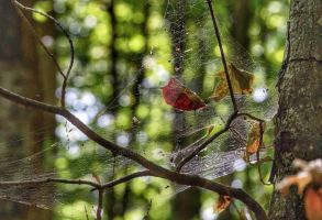 Web in the forest by IdolRebel