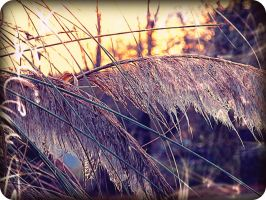 Through the pampas grass by x--photographygirl