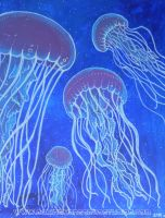 Jelly Fish by asamamoru