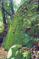 megalith wearing moss by worldhearts