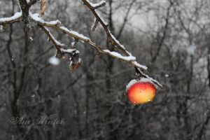 ...and again..same tree, same apple by neith13