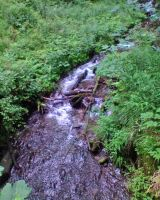Forest stream by Woolfred