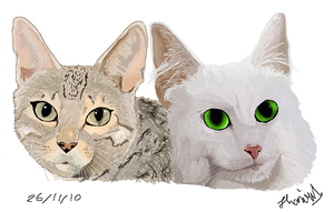 Cat faces by ConkerTSquirrel