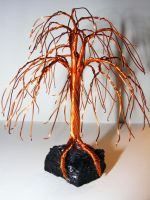 Mini Weeping Willow *Sold* by Roses-to-Ashes