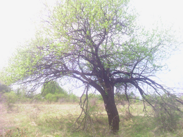 Tree 2 by tonev