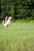 Dog frisbee (6) by Sedrikone
