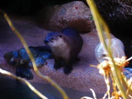 North American River Otter by NottheVoreFreak