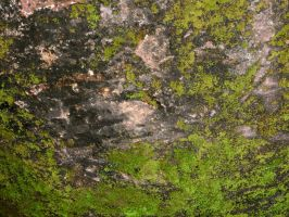 Moss on rock by Voyager168