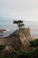 Lone Cypress by The-BigGuy