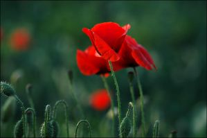 Red and green by koivu - K�rm�z� & Ye�il Avatarlar