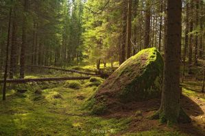 Forest by Toni-R