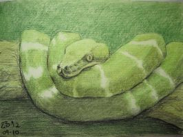 Pastel Exercise - Python by Zhangers