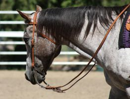 Horse Show Stock 012 by Notorious-Stock