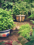 Vases and plants by MeoAgcat