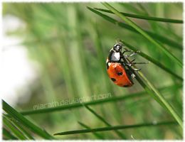.:Lady Bug:. by Miarath