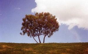 The tree by nouveauconscience