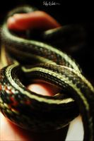 coils of the serpent by kikkums