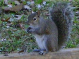 Close up on squirrels 11 by princesslillymono