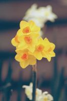 Flower Power by apparate
