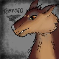 Tornado Face by Orochising