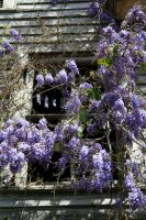 Window of Wisteria by Blue-to-the-Bone