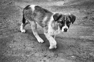 Solitary Puppy by ArgentumChloride