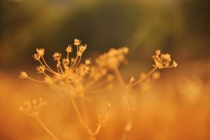 Golden brown: texture like sun by samrizzo