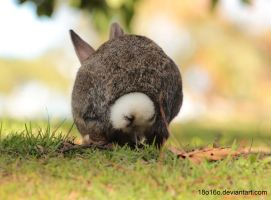Bunny Peeing by 18o16o