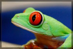 Red Eye Tree Frog by theperfectlestat