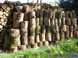 Wood pile - holzstoss 3 by archaeopteryx-stocks