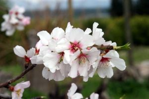 Blossom by uk-antalya