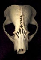 Badger Skull B by DonSimpson