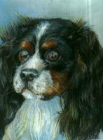 Spaniel by A-anarchia
