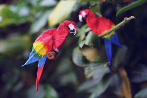 Scarlet macaws by synconi