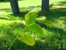 stick of leaves 5 by ElleStock