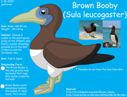 Brown Booby Info by JwalsShop