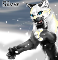 Silver- requested by Hero-Wuff