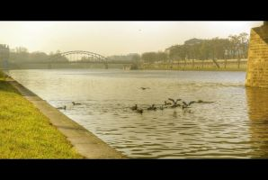 Bird Water Party by Beezqp