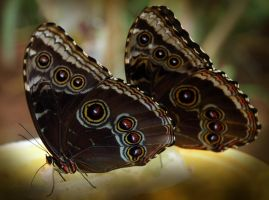 Pair of butterflies by LucieG-Stock