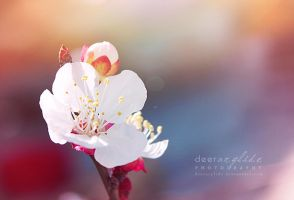 Electric Bloom by deerArylide