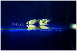 Fishes by D-R-E-A-M-O