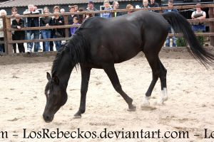 Arab Horse 2 - STOCK by LosRebeckos