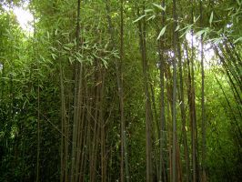 Bamboo 3 by ManixTT-stock