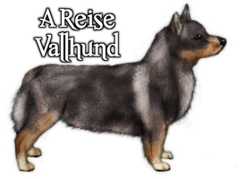 a Reise Vallhund by South-Sidee