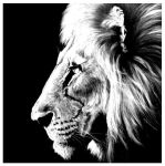 The Lion by death00