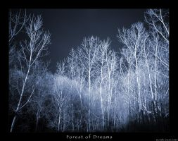 Forest of Dreams by livingindarkness