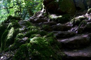 Puzzlewood 06 Stock by lokinststock