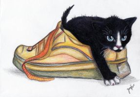 Shoe kitty by LenaZLair